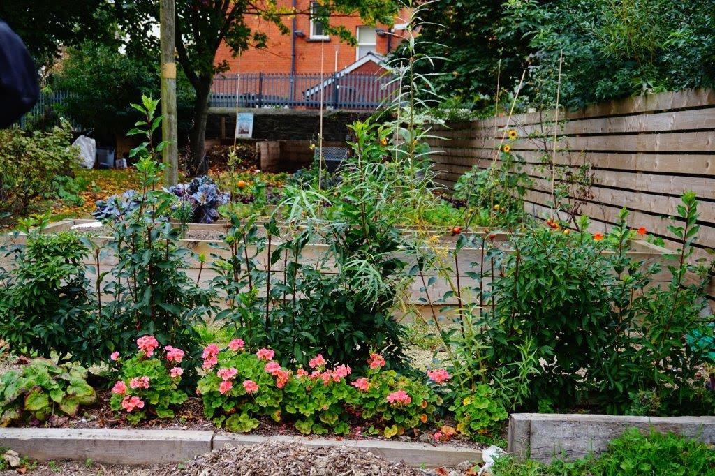 Focus on the muck and magic community garden dublin for Garden designs ie